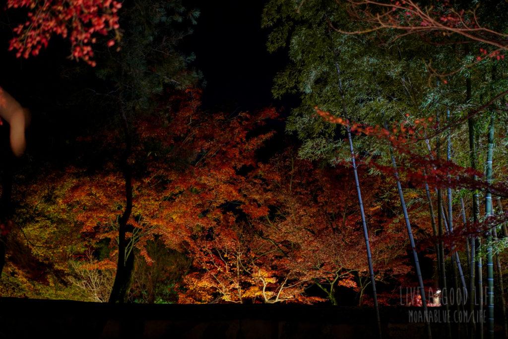 宝厳院紅葉ライトアップ