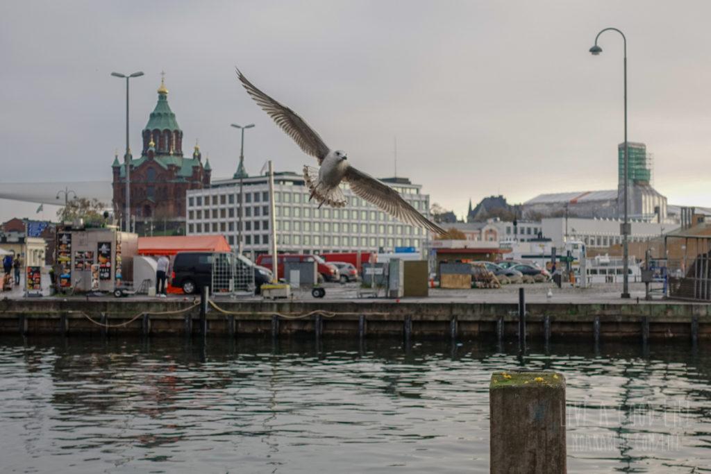 ヘルシンキのカモメ飛翔